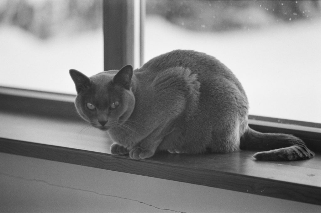 Ilford HP5 400 Pulled 200ISO 35mm Film Sample Fujica St705w