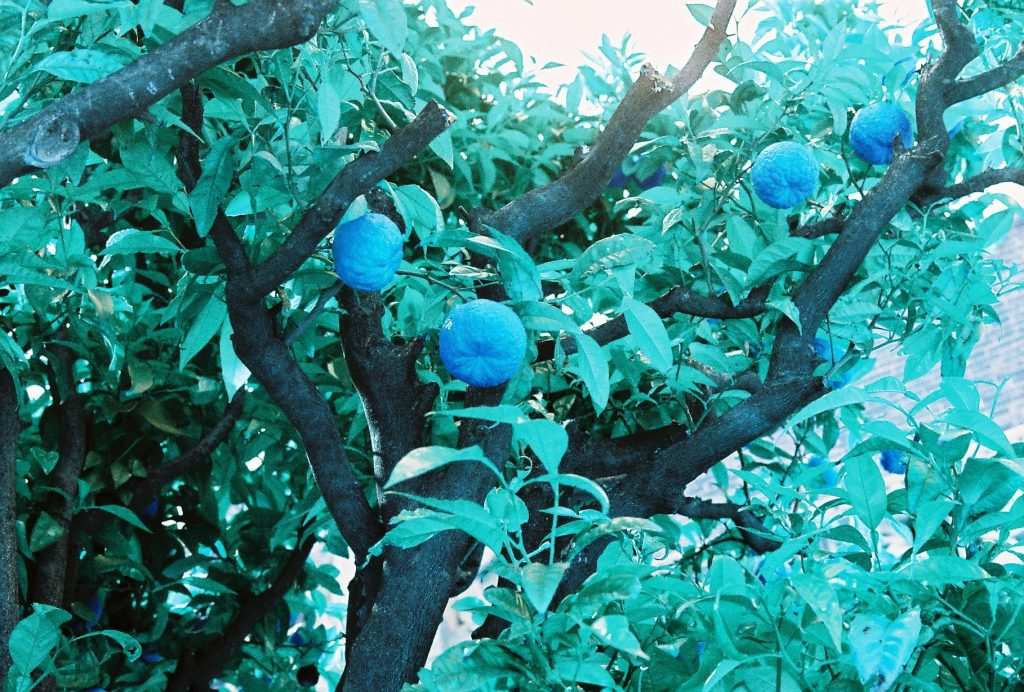 Lomograhy LomoChrome Turquoise 35mm Film Sample Image