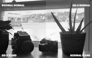 Comparing 4 B&W Film Development Techniques