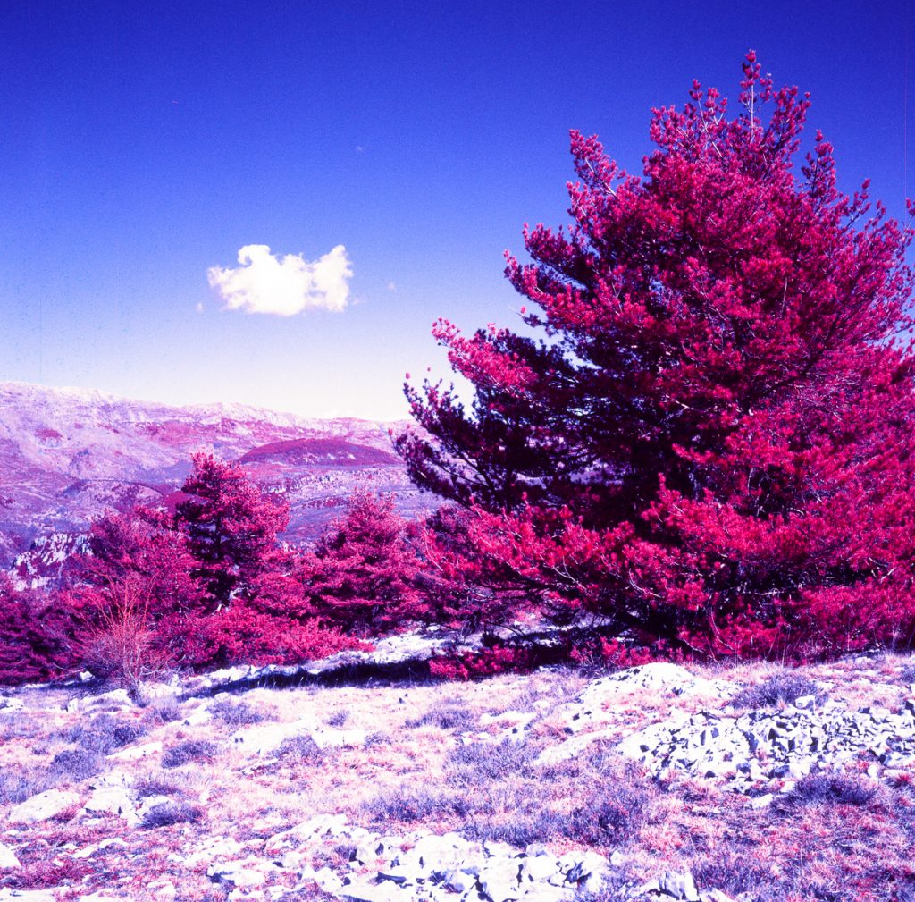 Kodak Aerochrome Infrared Color film Medium Format Rolleiflex shot with yellow filter